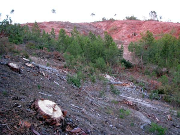 impacto medioambiente biomasa