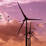 impacto medioambiental energia eolica