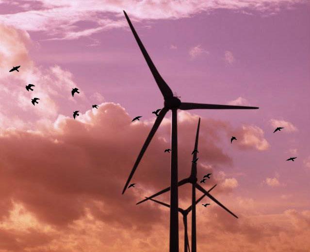 Impacto medioambiental de la energa elica altavistaventures Images